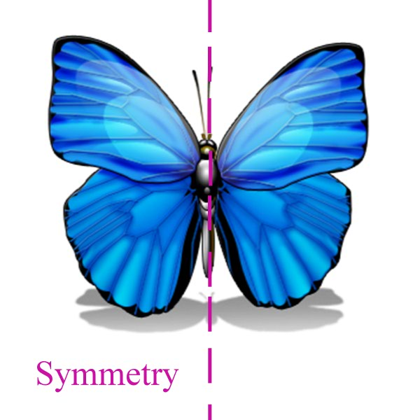 butterfly showing symmetry